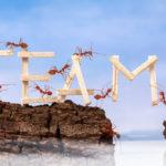 Teamleiders en coördinatoren: laat je inspireren over teamontwikkeling voor het secretariaat!